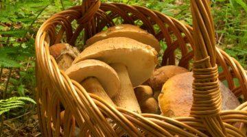 I Funghi: consigli per la raccolta, il consumo e la conservazione